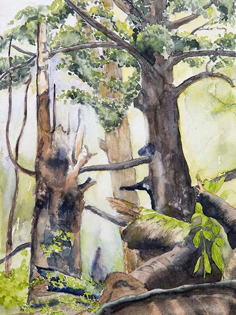 Im Wald, Aquarell 30/40cm, 2015