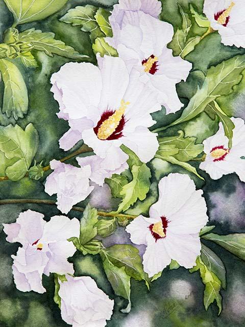 Galerie Blumen: Weißer Hibiskus, Aquarell 30/40cm, 2015