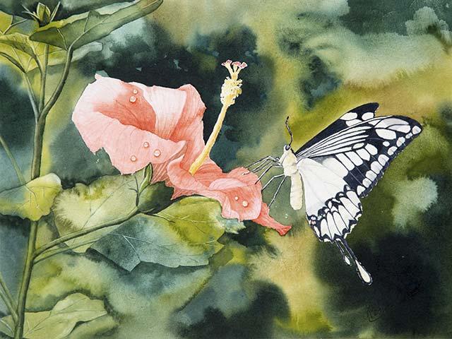 Galerie Blumen, Tiere: Schmetterling auf Hibiskusblüte, Aquarell 40/30cm, 2016