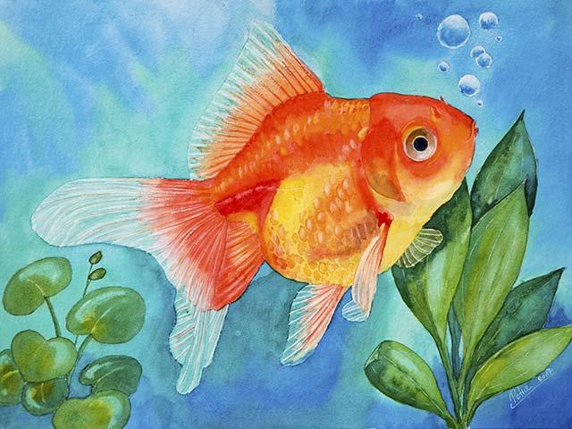 Galerie Tiere: Schleierfisch, Aquarell 40/30cm, 2017