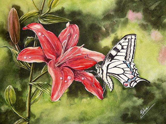 Galerie Tiere, Blumen: Schwalbenschwanz auf Lilie, Aquarell 40/30cm, 2018